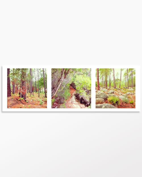 Photo triptyque Balade en forêt