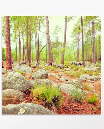 Photo triptyque Balade en forêt
