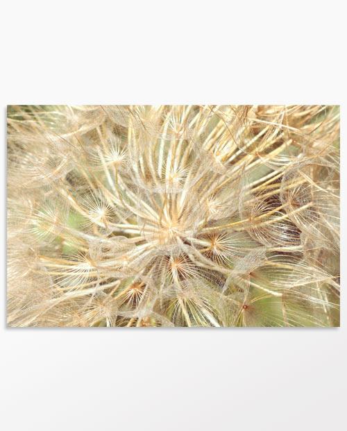 Le cotonneux - photo déco fleur