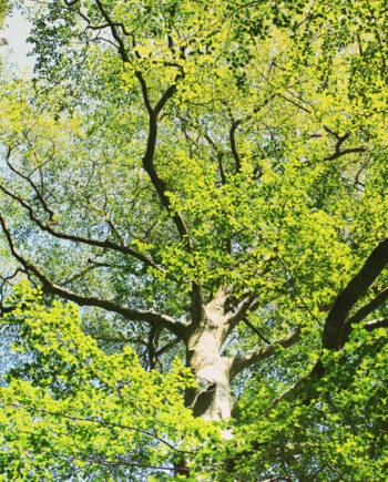 Photo panoramique nature L'arbre du Verdon