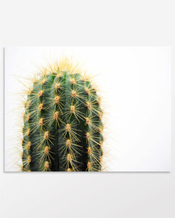 Tableau cactus vert