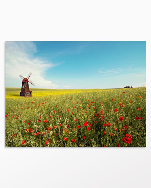 tableau moulin et coquelicots parfait pour créer une décoration champêtre