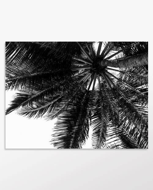 Tableau palmier noir et blanc pour une déco jungle chic